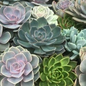 A Living Wreath -Succulents or Edibles...