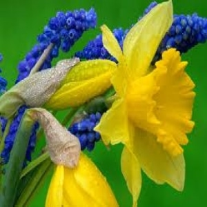 Spring Floral Designs Flower Course
