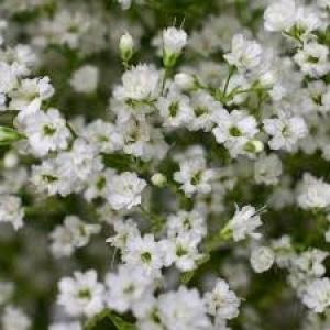 Flower Cloud - Foam Free